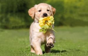 chiens fleurs